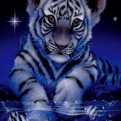 White Tiger In Blue Night