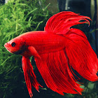 GETropicalfish