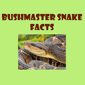 Bushmaster Snake Facts
