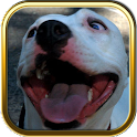 Pitbull Dog Puzzle Games icon