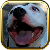 Pitbull Dog Puzzle Games