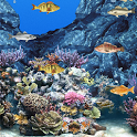 Abubu ocean live wallpaper icon