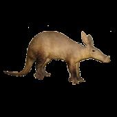 Aardvark Vs Ant
