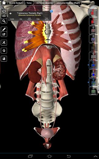 Essential Anatomy 3 - screenshot
