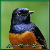 Kicau Master Burung