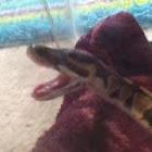 Snake Freak