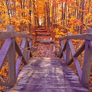 bridge-to-fall-fantasy-hdr-by-somadjinn.jpg
