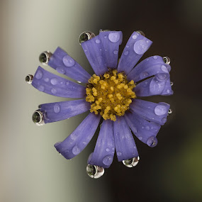 Fleur by Anna Gottlieb - Flowers Single Flower