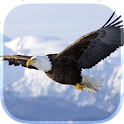 Eagle Live Wallpaper icon