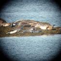 Various Seals