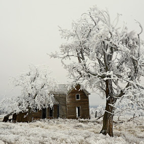 Hard Winter by Laddy Kite - Buildings & Architecture Decaying & Abandoned (  )