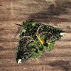 Ennominae, Geometridae