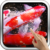 Water Effect: Bright Koi Fish