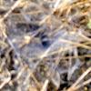 Funnel Web Weaver