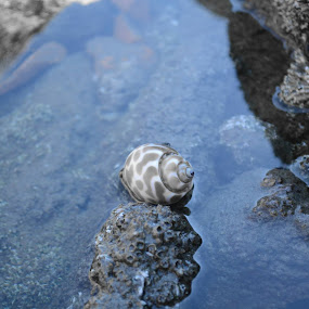by Syed Rixvi - Nature Up Close Water