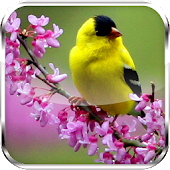 Birds Flowers Live Wallpaper