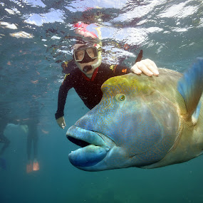 Maori Wrasse by Lee Davenport - Animals Fish