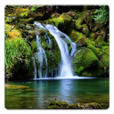 Nature Wallpapers!