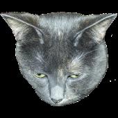 Weird Cat Sounds