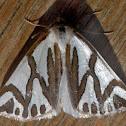 Mitre Satin Moth