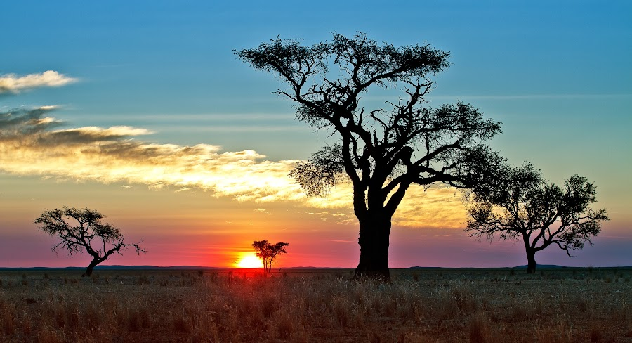 Camelthorn silhouettes by Xenia Ivanoff-Erb - Landscapes Sunsets & Sunrises ( sunset, trees, landscape, silhouettes. nature,  )
