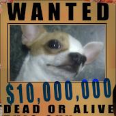 Wanted Camera
