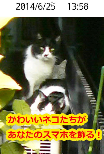 かわいい猫壁紙【ねことけい】