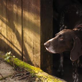 Cambria... by Hanna Králíková - Animals - Dogs Portraits