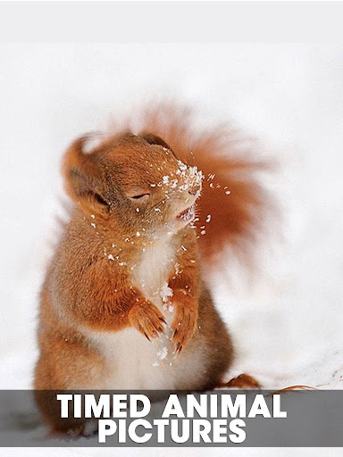 Timed animal pictures