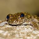 Waterfall Frog