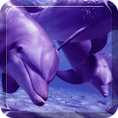 Dolphin Live Wallpaper