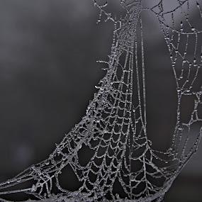 by Kathelijn Vlaemynck - Nature Up Close Webs