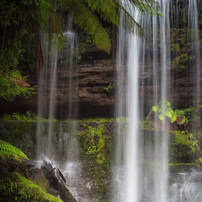 Russell Falls by Steve Brooks - Landscapes Mountains & Hills ( canon, national park, tasmania, tree, australia, waterfall, mt field, ferns, rainforest )