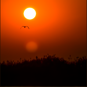 African Sunset - Chobe by Richard Wicht - Landscapes Sunsets & Sunrises ( bird, chobe, botswana, silhouette, africa, kasane,  )