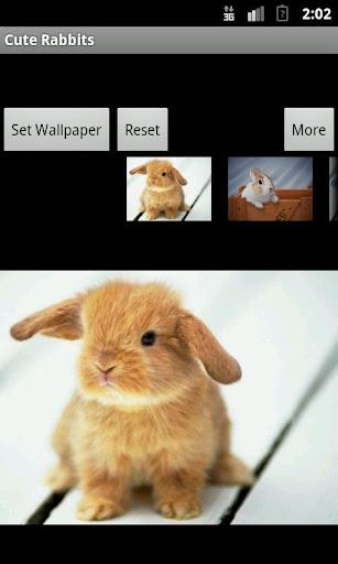 Cute Rabbits Wallpaper