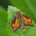 Dakota Skipper