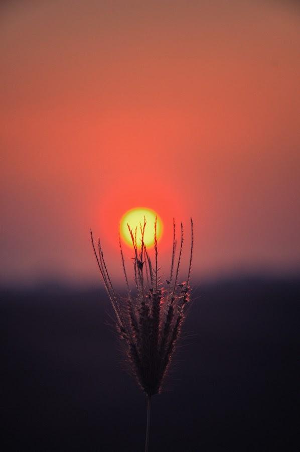 the sunset by Mushahidin Mdzuki - Landscapes Sunsets & Sunrises