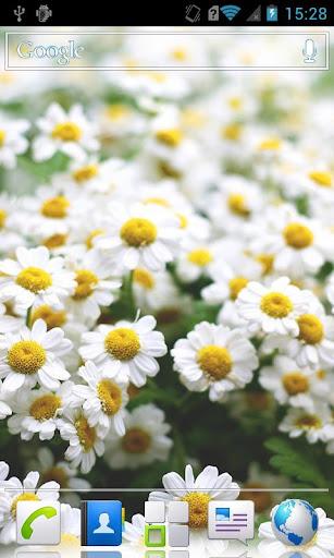 Little flowers Live Wallpaper