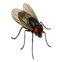 Pesky Fly Live Wallpaper icon