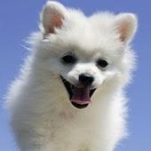 3D cute dog A12