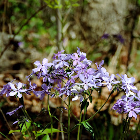 by Michelle Cutt - Flowers Flowers in the Wild