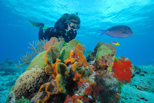 Even scuba diving in shallow waters lets you enjoy the undersea beauty near Cozumel.