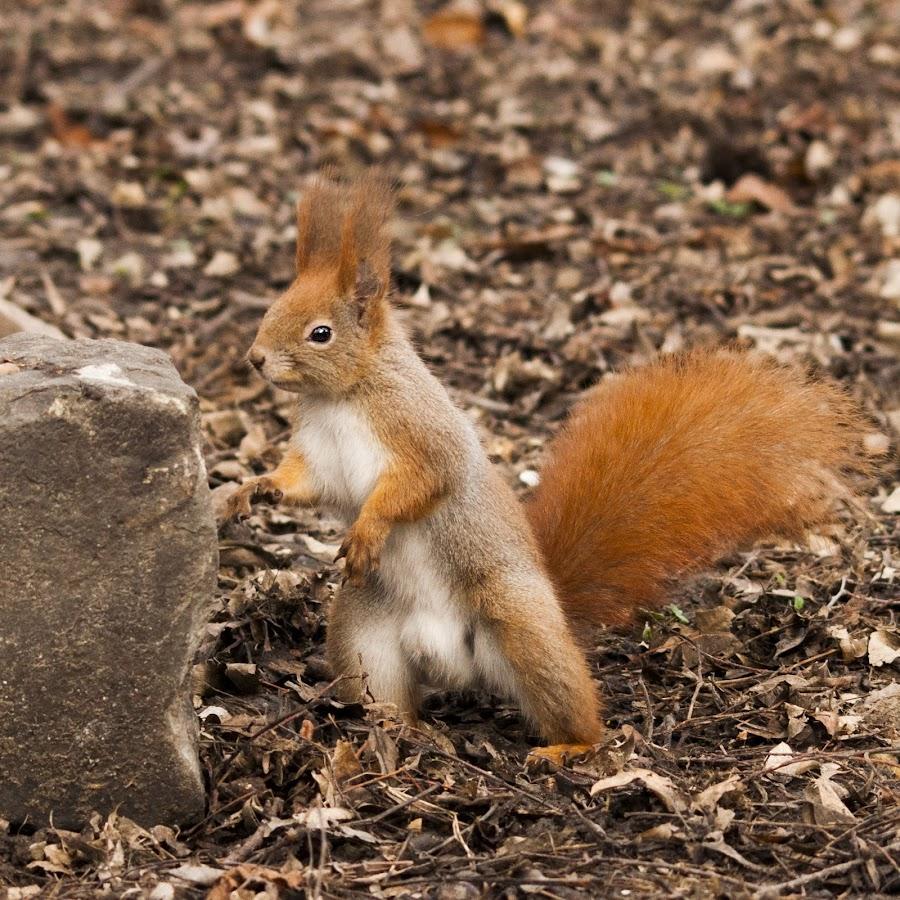 Body builder squirrel by Ivány Richárd - Animals Other Mammals