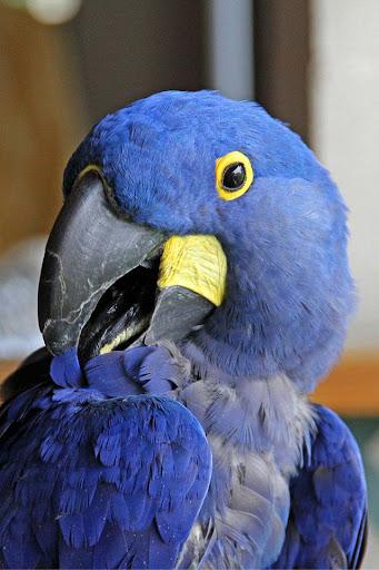 Parrot HD Wallpaper