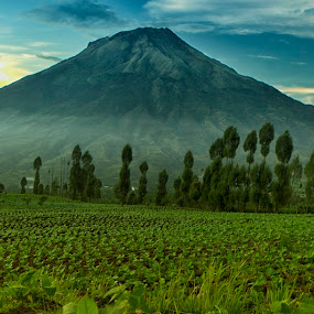 mountain with tobacco field by Septyan Lestariningrum - Landscapes Mountains & Hills