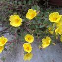 office flower