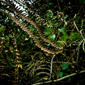 by Abhijit Pal - Nature Up Close Leaves & Grasses