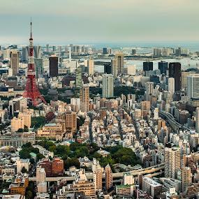 Afternoon in Tokyo by Nicola Scarselli - City,  Street & Park  Vistas