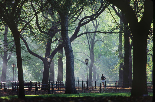 A peaceful landscape in Central Park, New York.