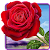 Rose. Magic Touch Flowers file APK for Gaming PC/PS3/PS4 Smart TV